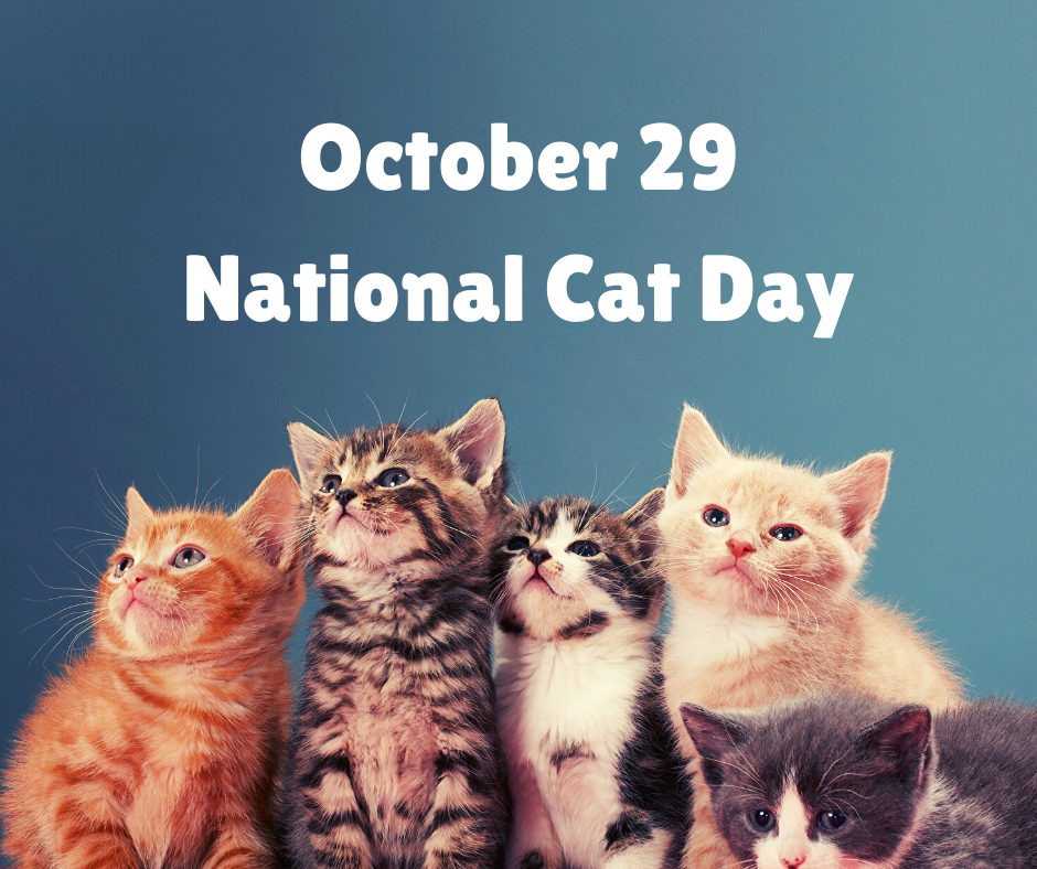 Wow Meow It S National Cat Day Ruff Drafts